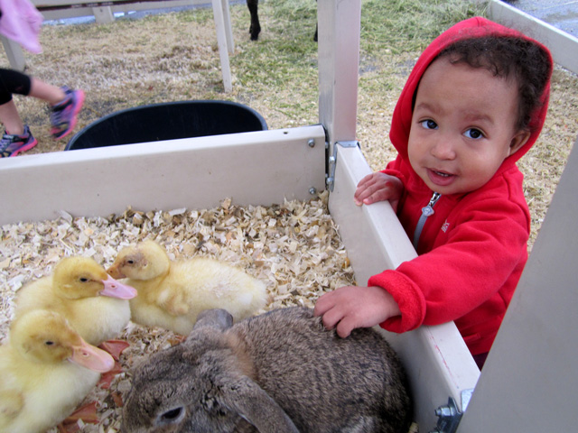 Irene with ducks and rabbit, Fort Collins, Colorado, 2015