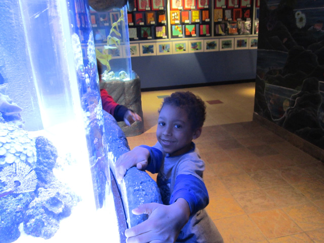 Joachim looking in an aquarium at the butterfly museum, Westminster, Colorado, 2011