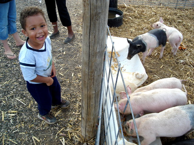 Joachim with pigs, Fort Collins, Colorado, 2008