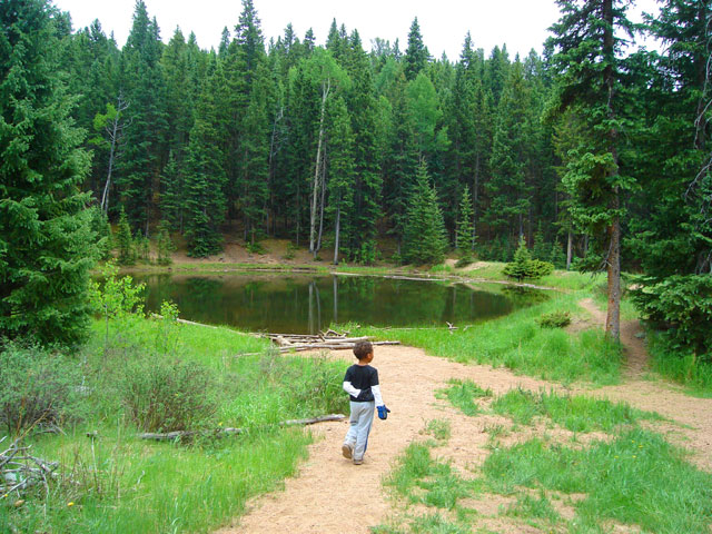 Lost Pond, Mueller State Park, Colorado, 2010