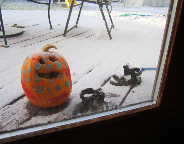 Joachim's pumpkin in the snow, Fort Collins, Colorado, 2011