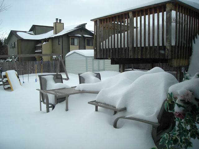 back yard covered in snow, Fort Collins, Colorado, 2006