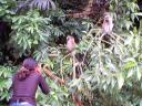 """Joanitha photographing monkeys, national arboretum"", Entebbe, Uganda, 2003"