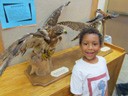 Joachim with hawks, Milwaukee, Wisconsin, 2011